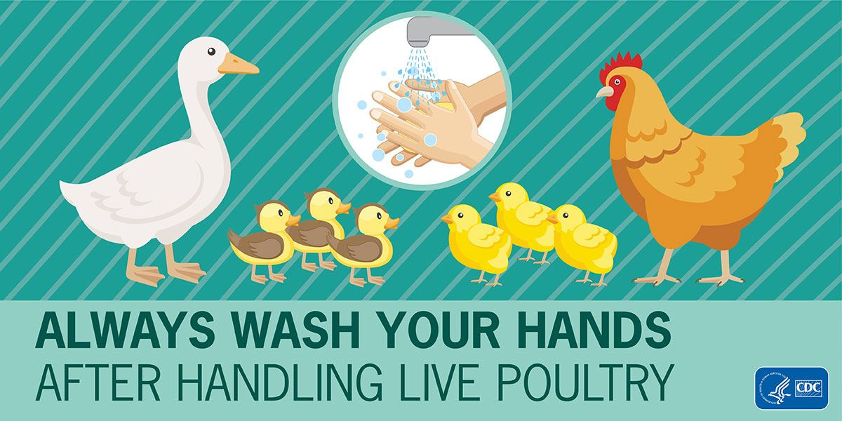 Poultry-Handwashing-Sticker_1200x600